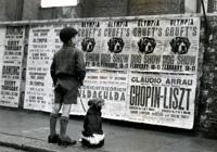 Выставка собак Crufts