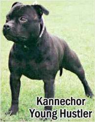 Kannechor Young Hustler