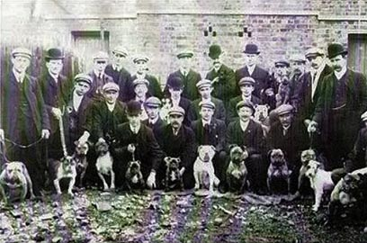 Hartlepool dog show 1900